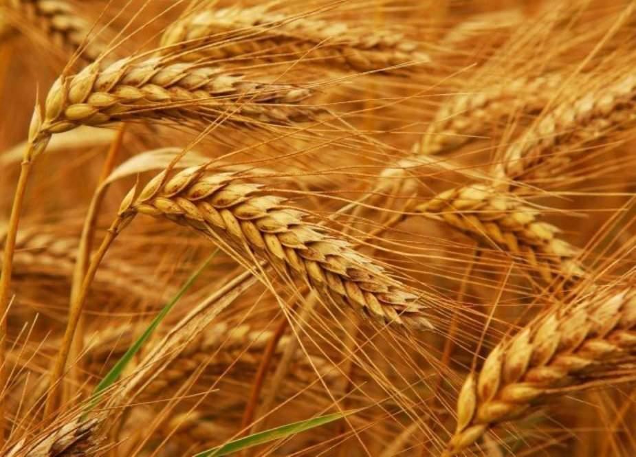 پاکستان کا روس سے ایک لاکھ 80 ہزار میٹرک ٹن گندم درآمد کرنے کا فیصلہ