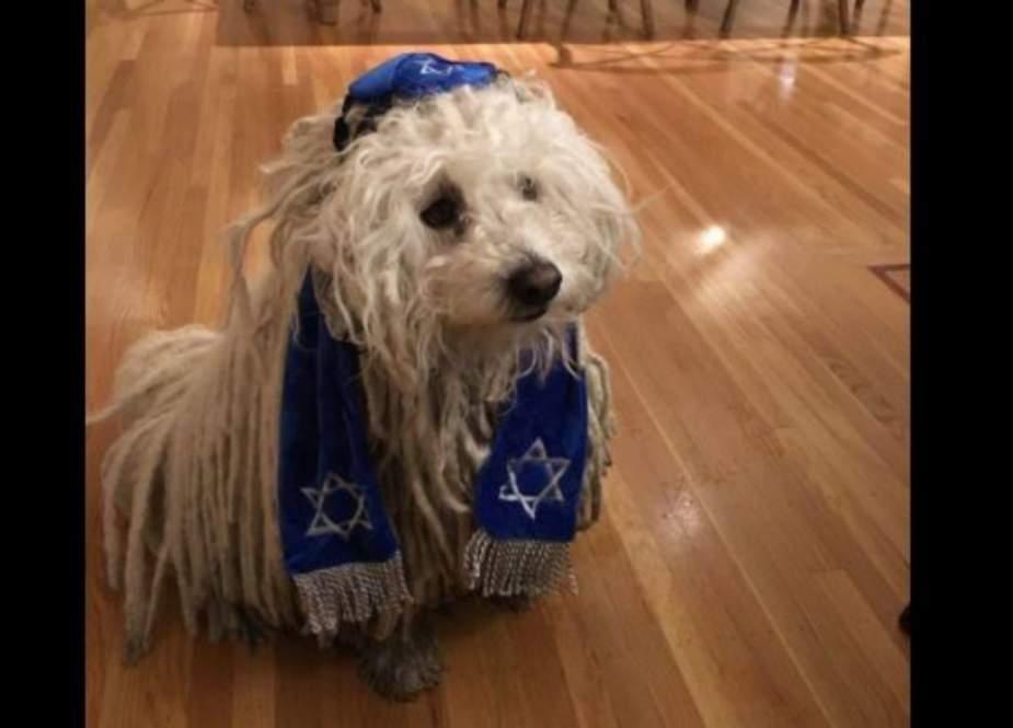 Dog in Jewish Clothing.jpg