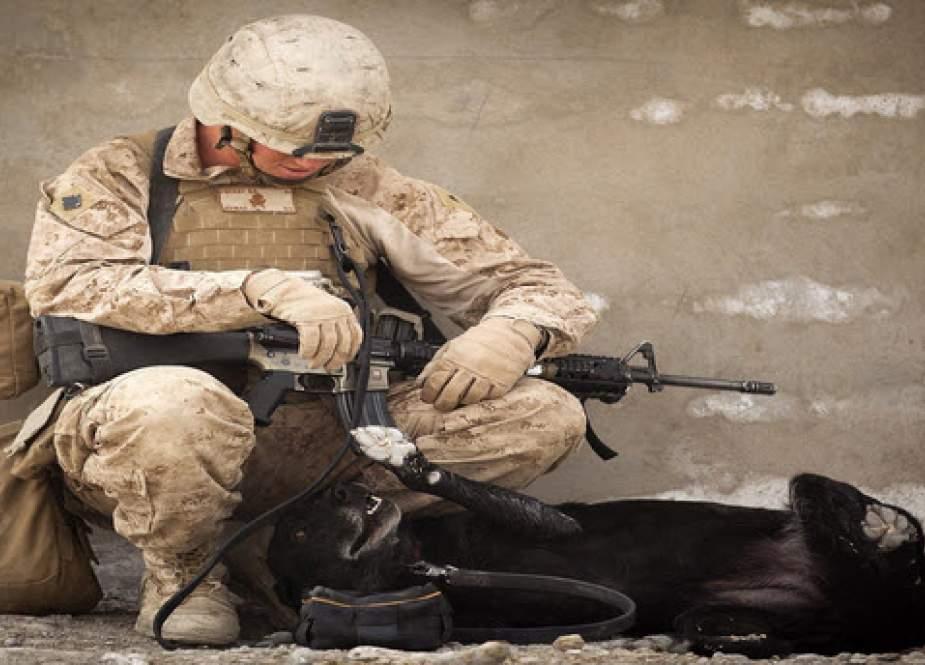 دور جدید خودکشیها در میان نظامیان آمریکایی؛ وضعیت قرمز در پنتاگون